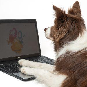 Dogdance Online-Gruppenstunde