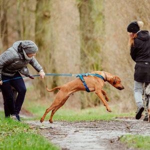 Workshop Leinenführigkeit und Hundebegegnungen